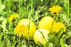 3 желтых пасхального яйца в зеленой траве Стоковое Фото