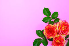 3 желтых розы с зелеными листьями Стоковая Фотография RF