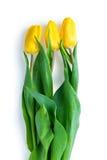 3 желтых тюльпана на белой предпосылке Стоковое Фото