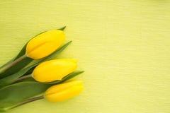 3 желтых тюльпана отдыхая на зеленом цвете покрасили предпосылку Стоковые Фотографии RF