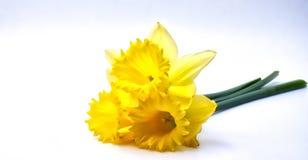 3 желтых цветка с зелеными стержнями Стоковые Изображения RF