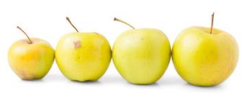 4 желтых яблока с черенок Стоковые Изображения RF