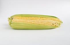 2 желтых corns на белой предпосылке Стоковая Фотография RF