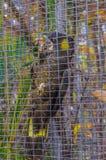 Желт-замкнутый черный попугай какаду сидя на ветви в Puert Стоковые Изображения RF