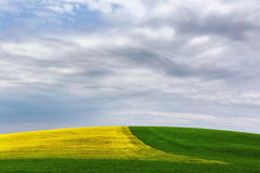 Желт-зеленое поле под облаками Стоковые Изображения