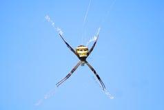 Желт-коричневый паук Стоковое Фото