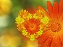 Желт-красные цветки, на предпосылке запачканной зеленым цветом closeup Яркий флористический состав, карточка на праздник коллаж ц иллюстрация штока