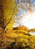 Живая желтая осень Стоковое фото RF