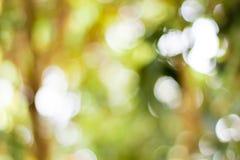 Живая зеленая коричневая предпосылка нерезкости Стоковое Фото