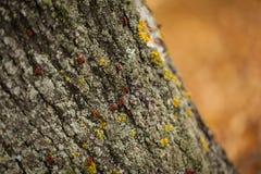 Живая осень в парке Стоковое Изображение RF