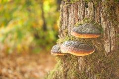 Живая осень в парке Стоковое фото RF