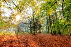 Живая осень Стоковое Изображение