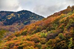 Живая осень Rila Стоковые Фото