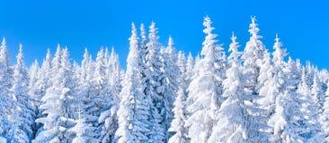 Живая предпосылка каникул зимы при сосны покрытые сильным снегопадом Стоковое Изображение
