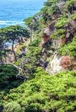 Живая природа в Монтерей Стоковое Изображение RF