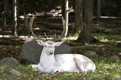 Живая природа Канады Стоковое Изображение RF