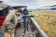 Живая природа наблюдатели наблюдают wolfs в холодном дождливом дне Стоковое фото RF