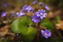 Живая природа, травы леса в предыдущей весне Стоковые Фото