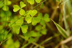 Живая природа, травы леса в предыдущей весне Стоковые Изображения