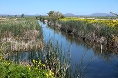 живая природа убежища болотоов национальная Стоковая Фотография