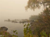 Живая природа леса Стоковое Фото
