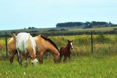 Живая природа лошадей Стоковое Изображение