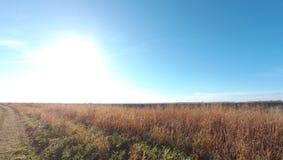Живая природа поля Стоковые Изображения RF