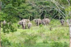 Живая природа слона семьи азиатского идя и смотря траву для еды в национальном парке Kui Buri леса Таиланд Стоковое фото RF