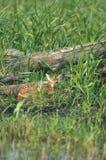живая природа убежища Стоковые Фото