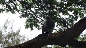 Живая природа Шри-Ланки Стоковые Фотографии RF