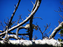 Живая природа любопытства Стоковая Фотография RF