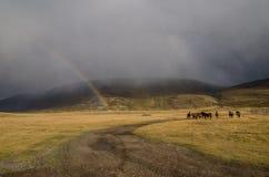 Живая природа Altai Одичалые коричневые лошади пася в глуши, и Стоковое фото RF