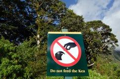 Живая природа NZ NZL Kea - Новой Зеландии стоковое фото