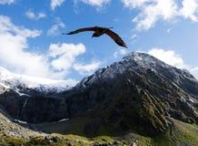 Живая природа NZ NZL Kea - Новой Зеландии Стоковые Фотографии RF