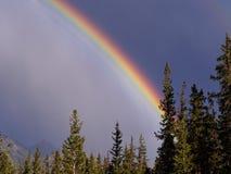 Живая, яркая радуга с бурным контрастом неба Стоковая Фотография RF