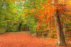 Живое изображение ландшафта пущи падения осени Стоковое Изображение RF