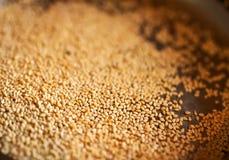 Живой желтый сезам макроса Стоковое Фото