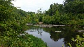 Живой зеленый цвет окружая спокойный поток Стоковая Фотография RF