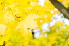 Живой листопад Стоковое Фото