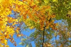 Живой листопад Стоковая Фотография RF