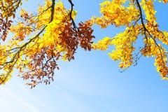Живой листопад Стоковое Изображение RF