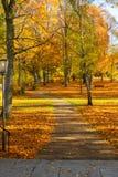 Живой листопад Стоковые Фото