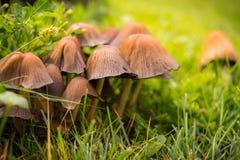 Живописная лужайка осени вектор грибов иллюстрации зеленого цвета травы шаржа Стоковое Изображение