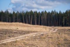 Живописная дорога к сосновому лесу Стоковое фото RF