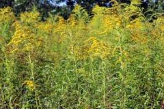 Живописная предпосылка травы Стоковое фото RF