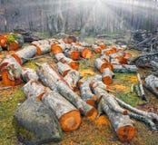 Живописная древесина ольшаника стоковое фото rf