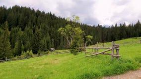 Живописная сцена гор весны с деревянной загородкой разделенного рельса через зеленый цвет и сочным выгоном со старым домом на sur сток-видео