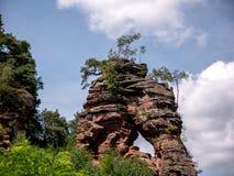 Живописное дерево поверх скалы стоковые фото