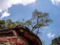 Живописное дерево поверх скалы стоковое изображение