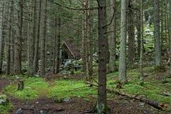 Живописное укрытие в зеленом лесе coniferous, гора Rila стоковое фото rf